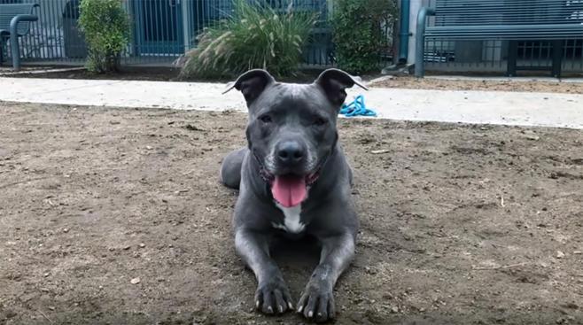 Leila lleva dos años esperando ser adoptada, pero no pierde la sonrisa