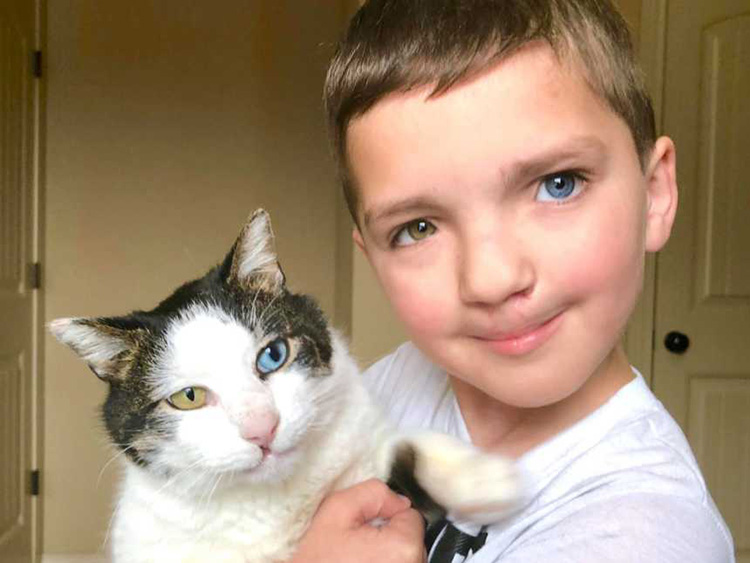 Una madre encuentra a un gato con los mismos problemas físicos que su hijo y lo adopta, ¡mira la foto!