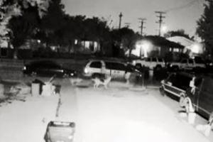 PETA dará $5,000 a quien denuncie a hombre que disparó contra perro en Los Ángeles