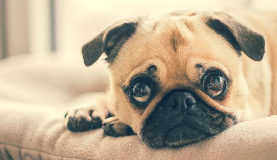 Foto: El perro con cara de humano que causa furor en Internet