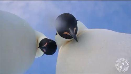 Un pingüino se obsesiona con una niña en el aquario de Nueva Jersey