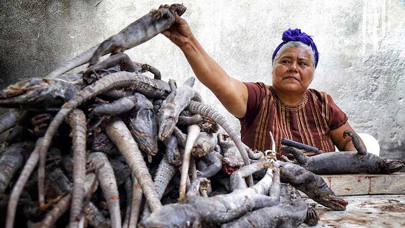 Fotos: Pueblo de México consume hasta 500 iguanas diarias durante Semana Santa
