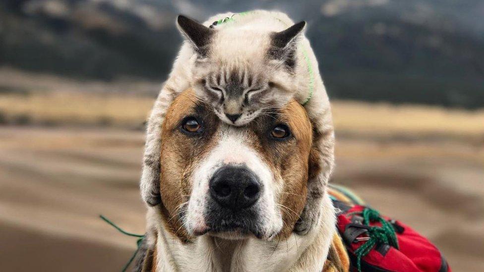 """Henry y Baloo: el perro y el gato viajeros que conquistaron Instagram con su tierna """"amistad"""""""