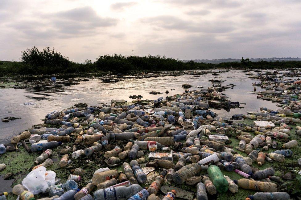 Descubren sin querer enzima que puede ayudar a combatir la crisis del plástico
