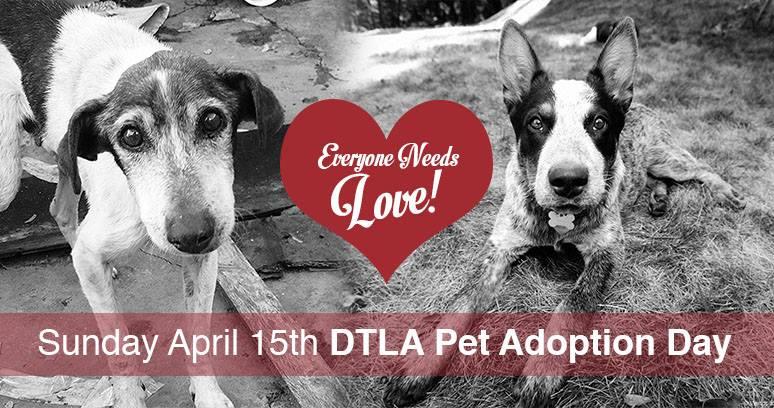 Este domingo: Día Anual de Adopción de Mascotas en el centro de L.A.