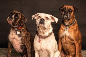 Los fans de los Dodgers podrán llevar a sus perros al partido del sábado