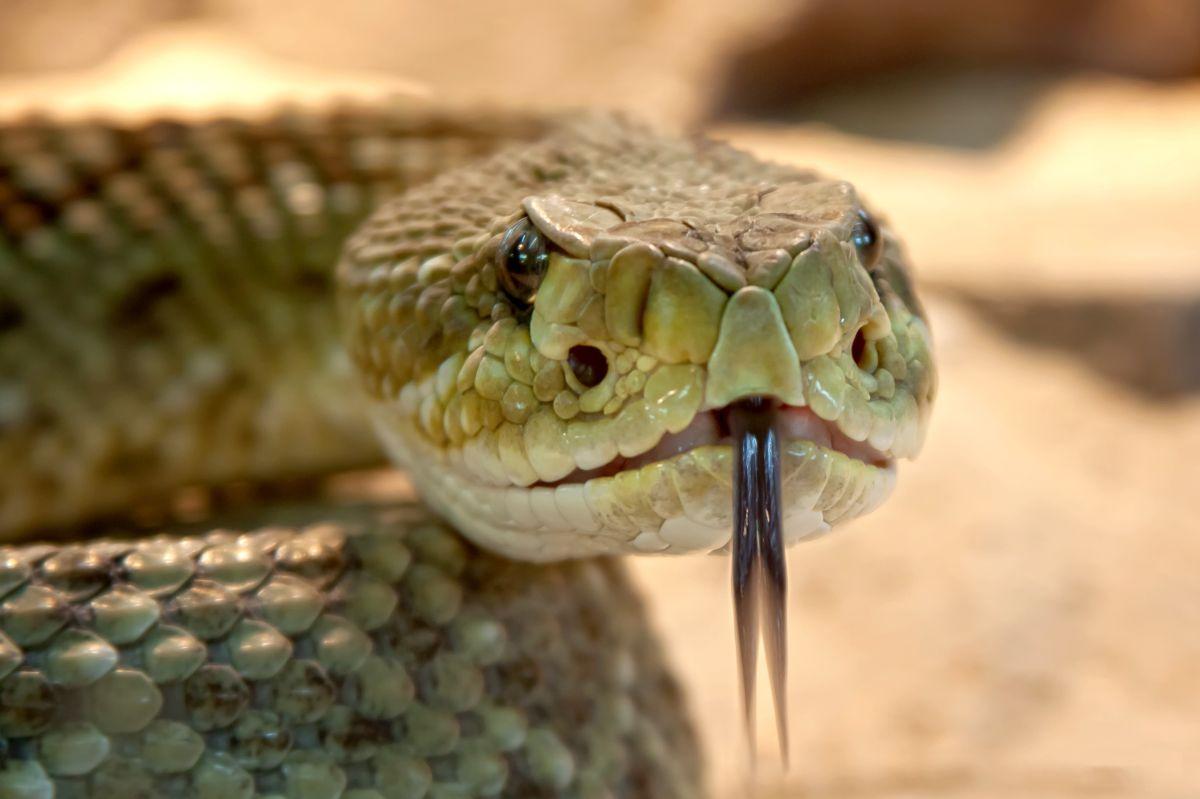 """Los contras de hacer la """"dieta de la serpiente"""""""