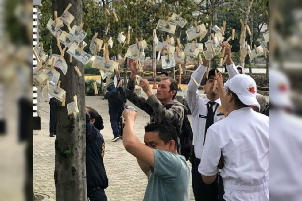 """Video: Árboles que """"dan dinero"""" aparecen en Colombia"""