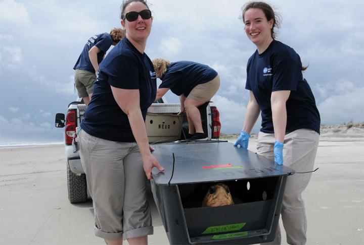 Viajan con 14 tortugas hasta Florida para liberarlas en el oceáno