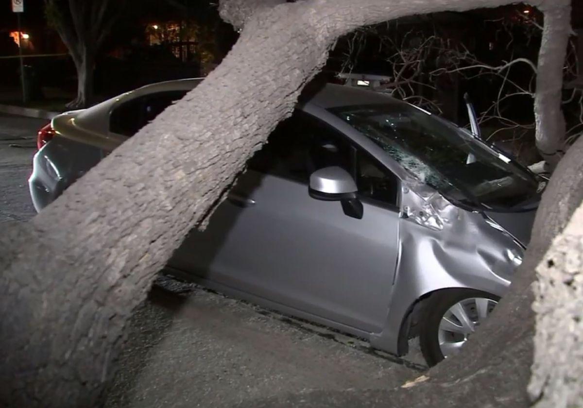 Fuertes vientos derribaron árboles y dejaron a 18,000 sin electricidad