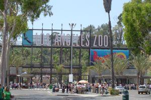 El zoo de Los Ángeles debería ser más transparente, según auditoría
