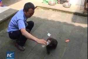Adoptaron a un perro y dos años después descubren que es ¡un oso!
