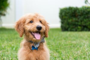 6 razas de perro que le darían tranquilidad a Trump y a la Casa Blanca