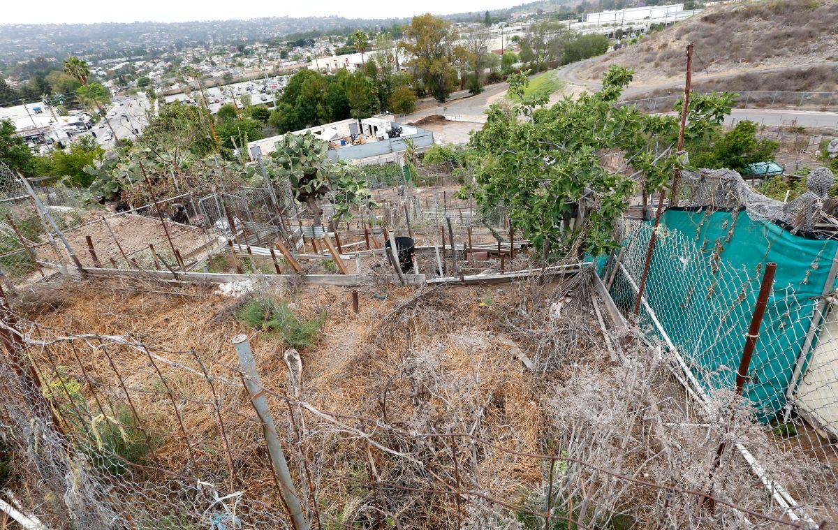 La sequía afecta la agricultura de California.