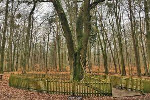 El árbol al que le escriben de todo el mundo para encontrar pareja