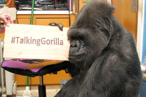Koko, la gorila que sabía lengua de signos, muere a los 46 años