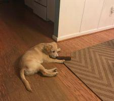 El curioso apego de un perro a un ladrillo