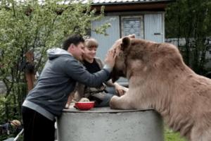 Una pareja rescató a un oso y ahora vive con ellos como si fuera su hijo