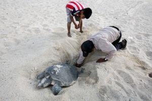 Las tortugas marinas siguen amenazadas pese a los avances en su conservación