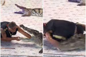 Domador casi muere comido por cocodrilo en espectáculo de circo en Tailandia