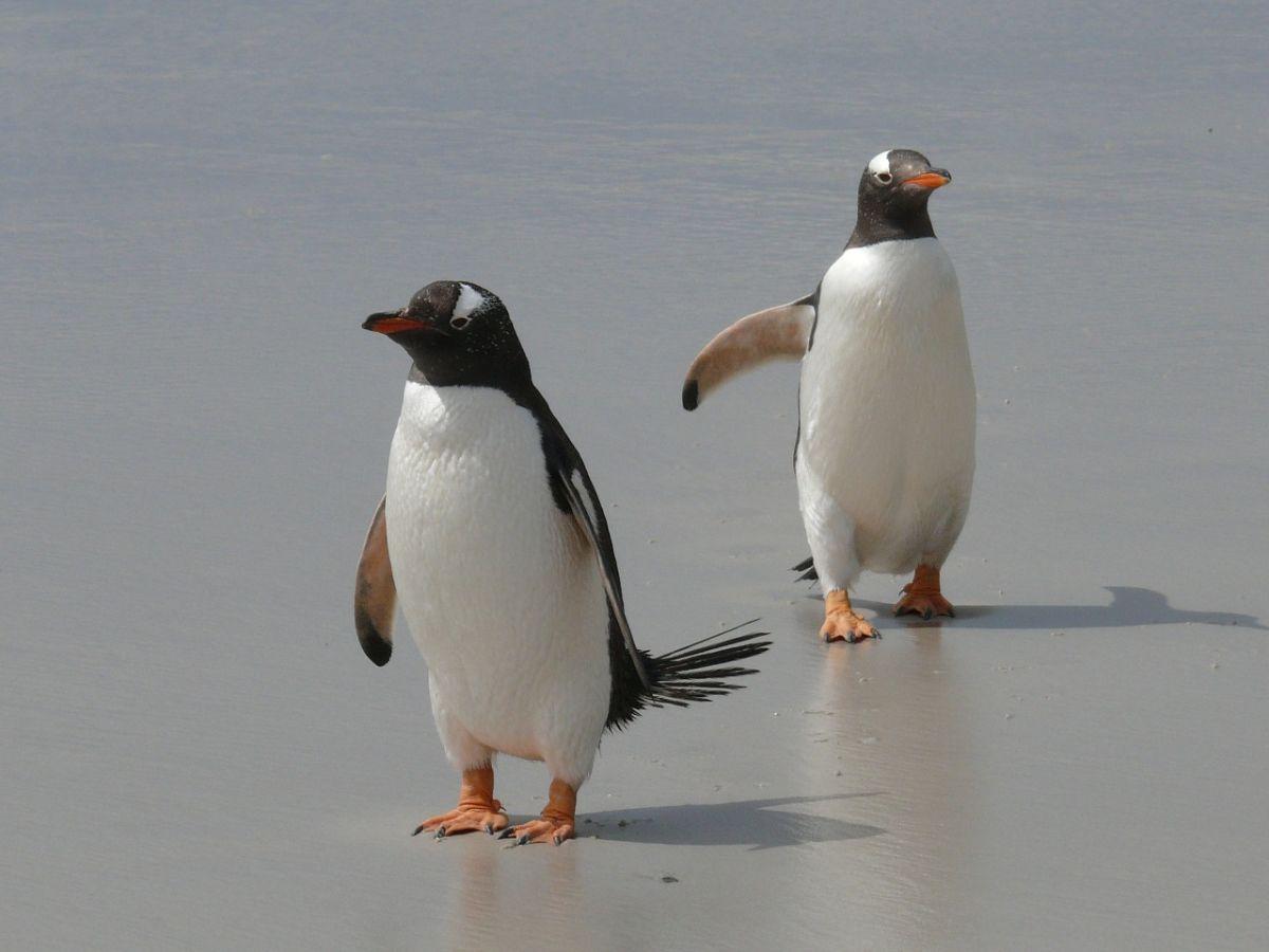 Estos son los pingüinos más tiernos que jamás verás