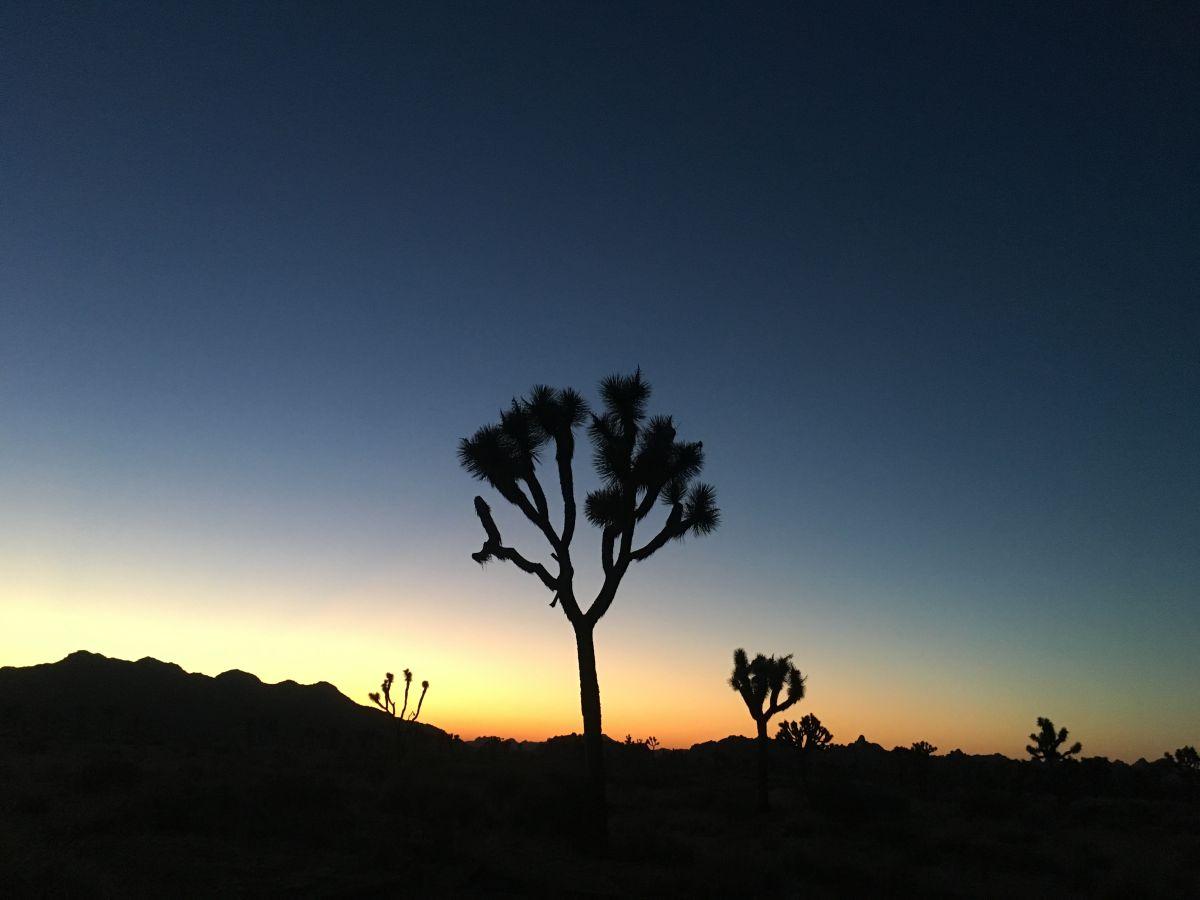 En los parques nacionales de Sequoia y Joshua Tree la calidad del aire es tan baja como en Los Ángeles