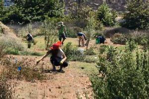 Voluntarios preservan el hábitat en la Reserva Natural White Point de San Pedro