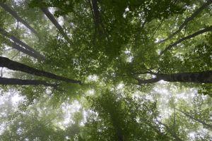 Descubren que hay más bosques en la Tierra que hace 35 años... pero no es una buena noticia