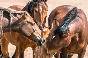 Aparecen caballos mutilados y asesinados, la policía sospecha de ritual satánico