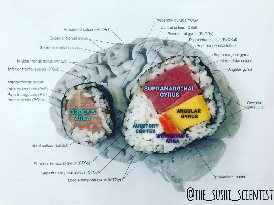 Con sushi, explica en Instagram el funcionamiento del cerebro