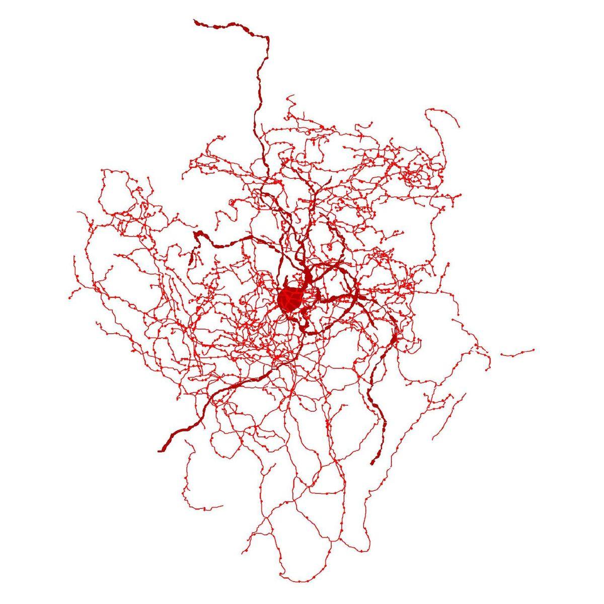 Qué son los escaramujos: Las neuronas que tienen fascinados a los científicos
