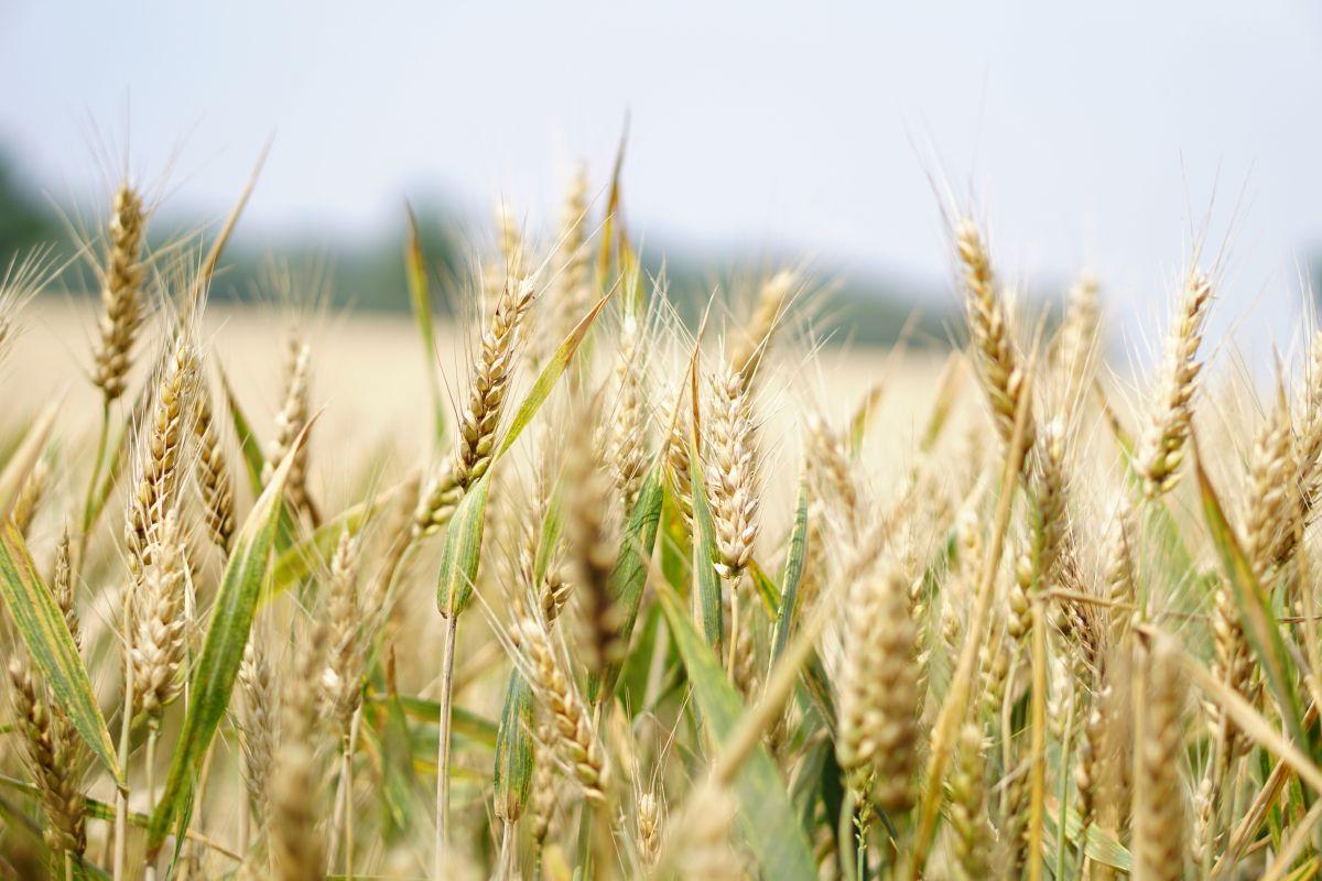 Juez federal ordena a EPA cese de uso de peligroso pesticida en alimentos