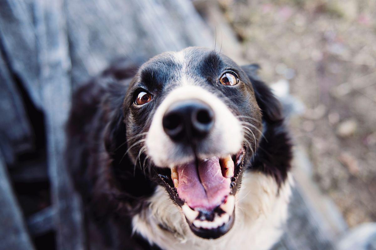 Más de  850 perros buscan hogar en L.A.