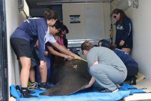 Emergencia en Florida: La marea roja mata peces y afecta el turismo