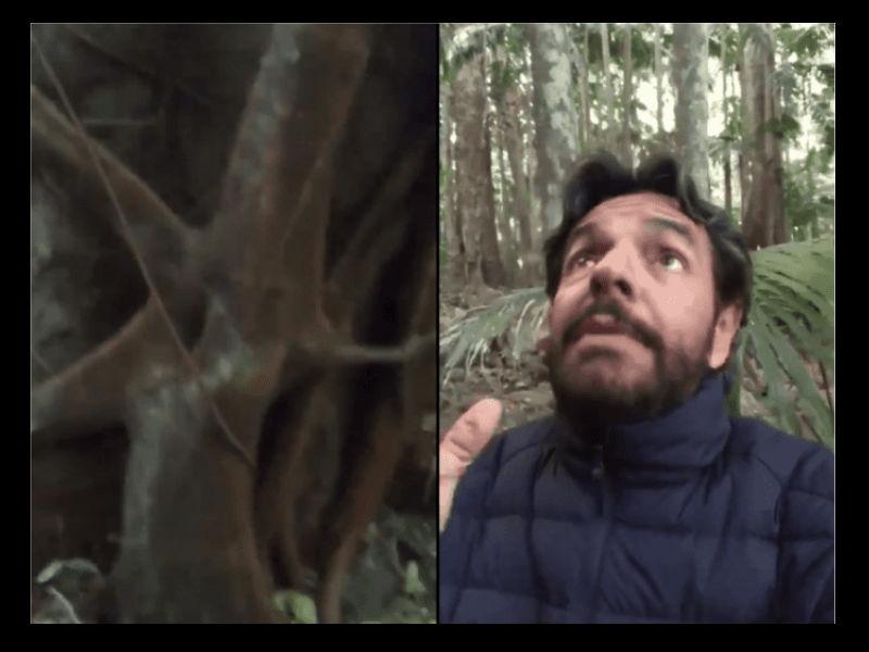 """Video: ¿Árboles """"asesinos"""" en las vacaciones de Eugenio Derbez?"""