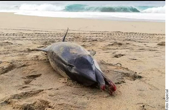 El animal fue hallado en una playa de Oaxaca.