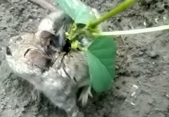 ¡Increíbles imágenes, le crece una planta en la espalda!