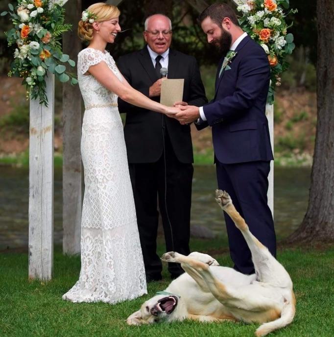 Este perro arruina la boda de sus dueños y la convierte en viral