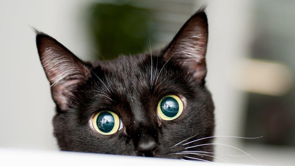 """El sorprendente desenlace del misterio del """"asesino de gatos"""" de Londres"""