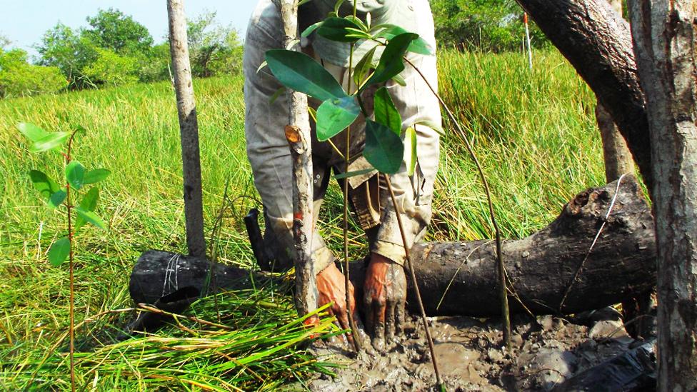Humedales: México y Colombia enseñan cómo protegerlos al mundo