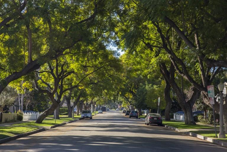 Cómo Tree People y Boeing quieren romper el ciclo de incendios en California