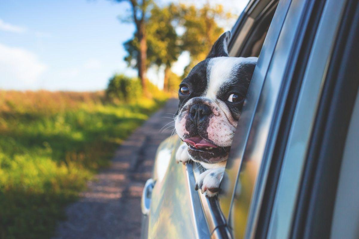 Estos son los mejores autos para viajar con tu perro