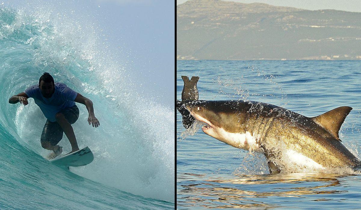 El joven que murió atacado por un tiburón se iba a casar