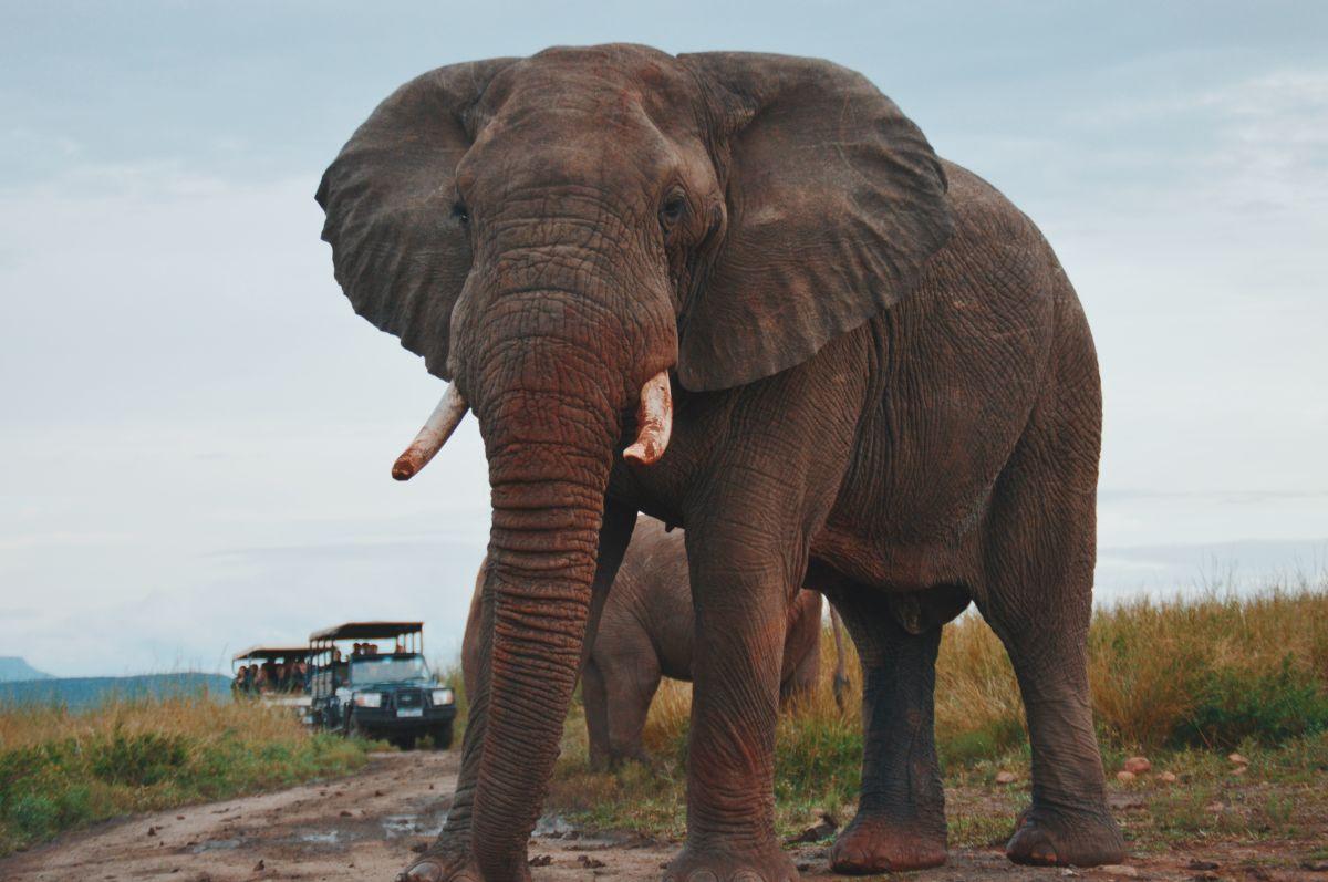 Muere pisada por un elefante al intentar tomarle una foto