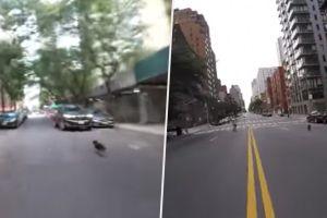 Vídeo: Perro se escapa en Nueva York y moviliza a ciudadanos por toda la ciudad