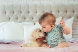 Por qué esta enfermedad que los cachorros contagian a los humanos puede ser una desgracia