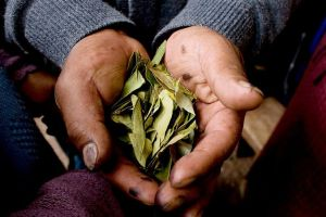 La única empresa de EEUU que importa hojas de coca con autorización de la DEA