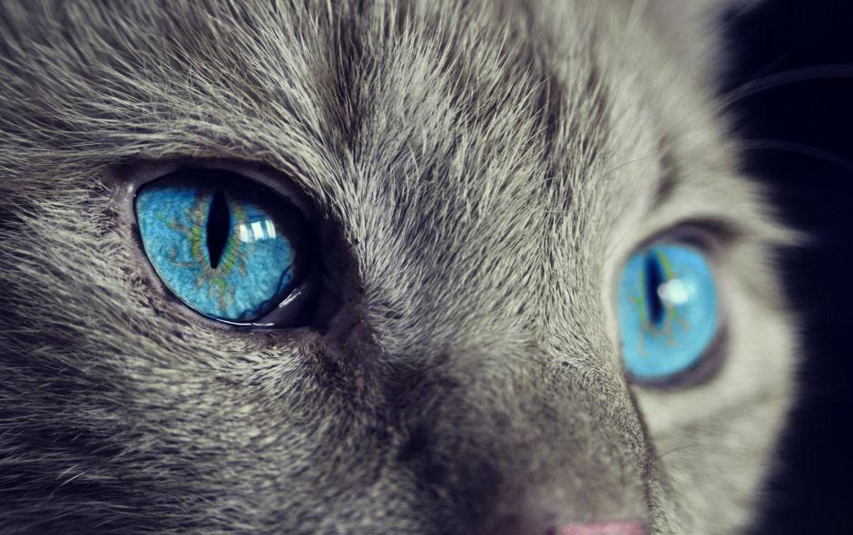 Gracias a su gata, salvó su vida del cáncer en dos ocasiones