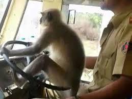 Un conductor de autobús es suspendido por permitir que un mono se ponga al volante