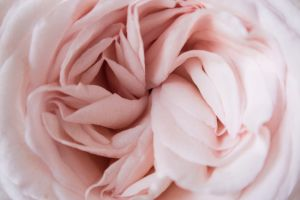 9 curiosidades de la vagina que tal vez no sepas